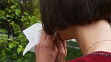 """""""Je n'ai jamais vu des patients aussi gênés"""" : jusqu'à un quart des Français allergiques aux pollens cette année"""