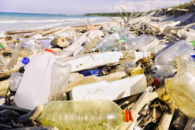 Scientists find new bacteria species that can eat plastic