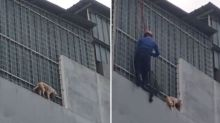 Indonesian firefighters rescue dog stranded on fourth floor ledge of residential building