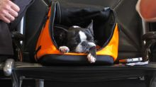 7 tips to help you travel safely with your dog or cat this holiday season