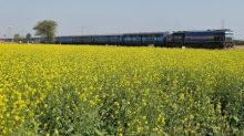 Indian oilseeds fall to multi-year lows on supply