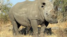 Travel on Trial: Picking up poo? You've got to get your hands dirty on a rhino conservation safari