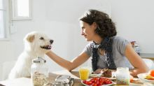Los 12 alimentos que nunca debe comer tu perro