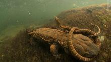 """Sehen Sie, welches atemberaubende Foto den Titel """"Wildlife Photographer of the Year"""" gewonnen hat"""