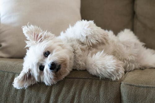 Research shows owning a dog can make you fitter