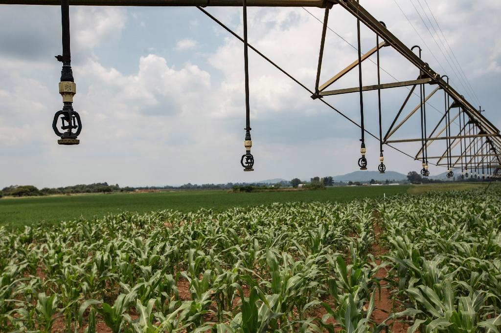 Irrigation systems, like the one shown in Pretoria, South Africa, can be used to dispense pesticides to combat the armyworm infestation, but some have begun to develop a resistance (AFP Photo/GULSHAN KHAN)