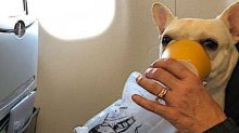 JetBlue Crew Saves Dog In Distress With Oxygen Mask