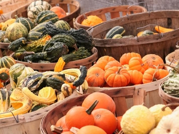 Looking for a pumpkin patch near you? Find a list of local events in your Patch.