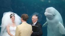 Se casan junto a una beluga como 'testigo'… y las redes se llenan de memes