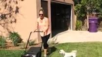 Dog Hates Lawn Mower