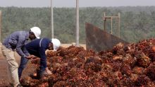 Indian palm oil imports unlikely to rise despite fall in prices
