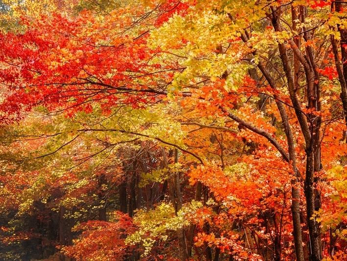 The 2020 Fall Foliage Prediction Map is out so you can plan trips to see autumn in all its splendor in N.C. and other U.S. states.