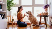 Tudo que você precisa saber antes de adotar um pet!