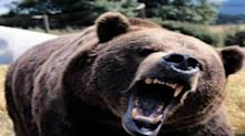 These 2 ASX 200 sectors are facing a bear market attack