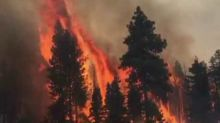 Hog Fire in Northern California Nearly 70 Percent Contained