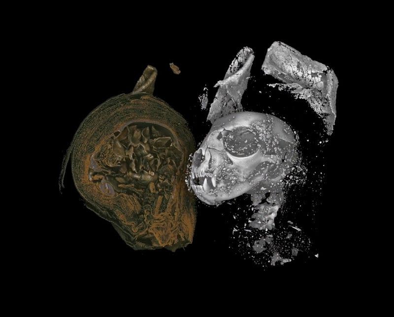 Scientists reveal grim secrets of ancient Egyptian animal mummies