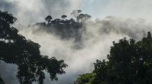 Cameroun : le gouvernement annule le projet d'exploitation de68000hectares de forêt vierge