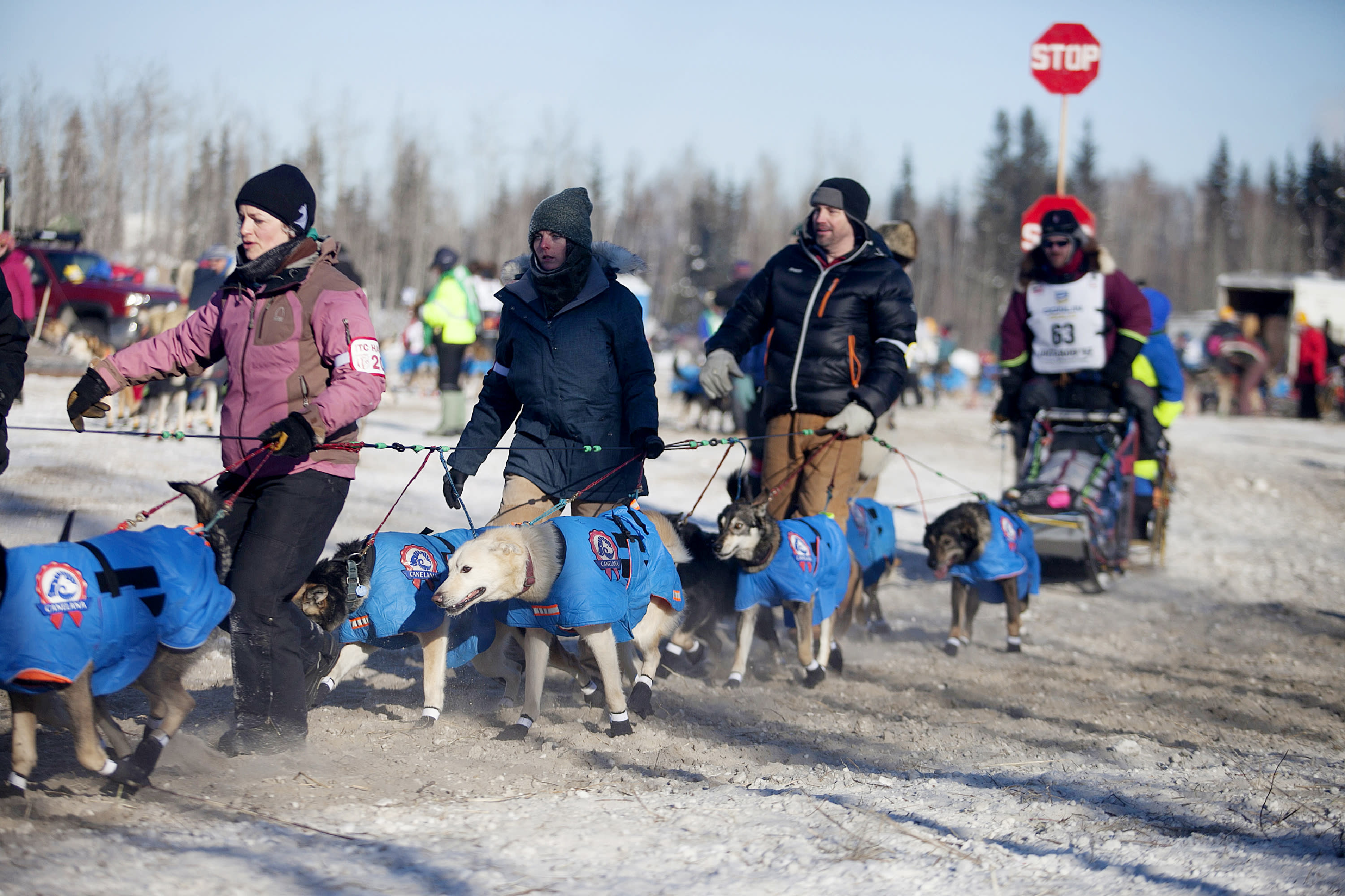 FILE - In this March 6, 2017 file photo, volunteer handlers guide teams out of the dog yard and down the chute to the starting line of the 45th Iditarod Trail Sled Dog Race in Fairbanks, Alaska. The world's most famous sled dog race will go forward in 2021, and officials are preparing for every potential contingency now for what the coronavirus and the world might look like in March when the Iditarod starts. It's not the mushers that worry Iditarod CEO Rob Urbach; they're used to social distancing along the 1,000 mile trail. The headaches start with what to do with hundreds of volunteers needed to run the race, some scattered in villages along the trail between Anchorage and Nome, to protect them and the village populations. (AP Photo/Ellamarie Quimby, File)