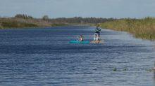 Florida elimina 5.000 pitones birmanas de la reserva de los Everglades