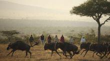 'Work from home' at a Kenya safari camp