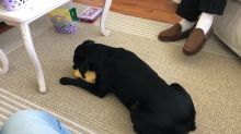 Sweet doggy loves stuffed animal Easter gift