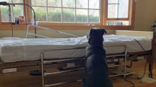 Adoption requests pour in after photo of dog waiting for dead owner goes viral