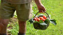 En momentos de crisis todos podemos ser agricultores