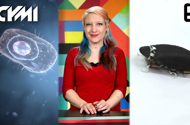 ICYMI: Smashing bacteria, high-jumping roboroaches and more