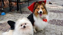 Dogs ready for 'Howlloween' at Grand Copthorne Waterfront Hotel