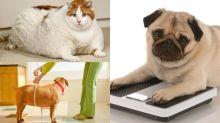 唔想寵物健康響起警號?5個寵物減肥妙法你要知