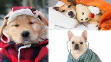 唔想愛犬生病?6個轉季養護措施你要知