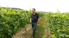 Spaced out: Champagne growers scrap 100-year vine-distancing rule