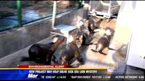 New project may help solve sick sea lion mystery