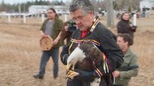 Injured bald eagle released back into wild going full circle for Mi'kmaq elder