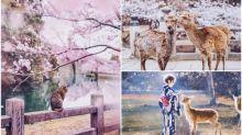 【相集】超靚日本櫻花相集 莫斯科攝影師走遍東京/奈良/京都