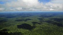 El futuro negro del Amazonas por culpa del calentamiento global: extinción casi total a finales de siglo