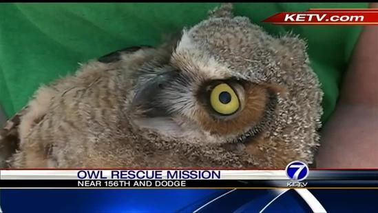 Rescuers free baby owl from light pole