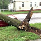 Fallen Tree Lies on Crushed Vehicle After Storm Isaias Hits Virginia