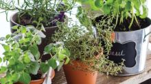 Grow Your Own Container Herb Garden