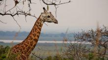 Biodiversity: Throwing money at schemes ineffective - charity
