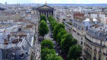 Los árboles de ciudad crecen más rápido que los de campo