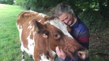 Retiring farmer decides not to have cows slaughtered and saves them instead