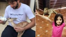 Twitter thrashes Shahid Afridi for keeping a lion chained at home