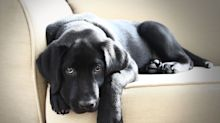 These Black Dog Breeds Are So Cute, You Won't Mind Cleaning Up Their Fur