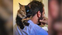 Esta gata con dos caras parece un producto del Photoshop, pero es real