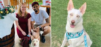 Dog forgotten in car for 7 hours by pet daycare dies
