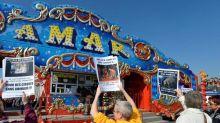 Les cirques itinérants devront se passer des animaux sauvages