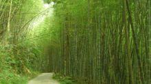 秒飛京都嵐山 !全台四大必訪竹林秘境