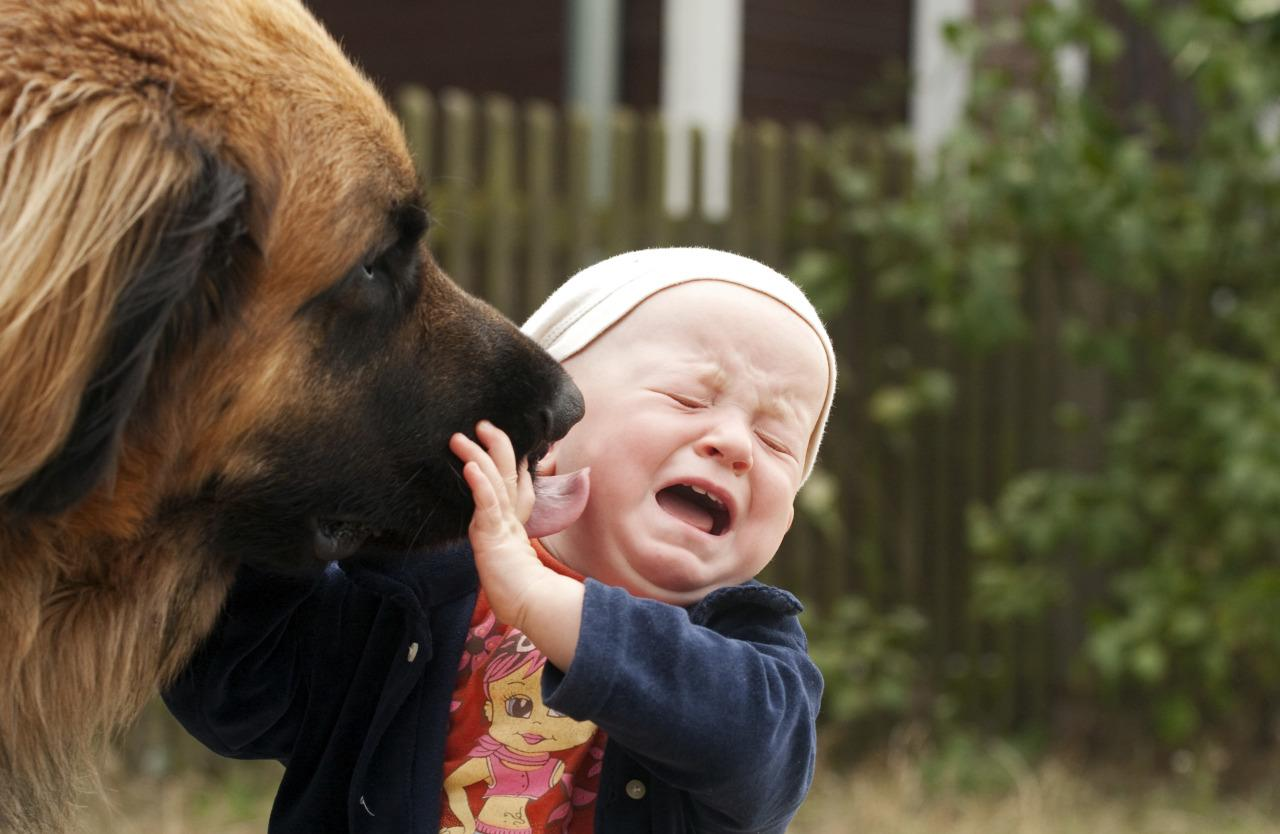 This Is Why You Should Never Let Your Dog Lick Your Face