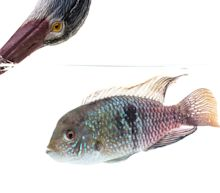 What Kind Of Personality Does Your Fish Have?